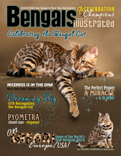 Bengals Illustrated Celebrating the Bengal Cat