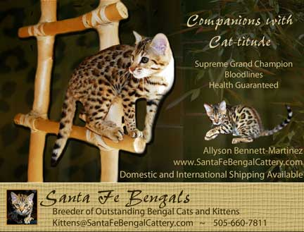 Santa Fe Bengal Cattery – Certified Reputable Breeder