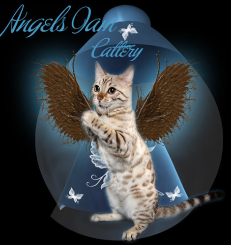 Angels I Am Bengal Cats – Certified Reputable Breeder