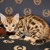 ADONIS BENGALS Kitten (Male/boy) available now