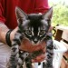 Charcoal Bengal Kittens Available