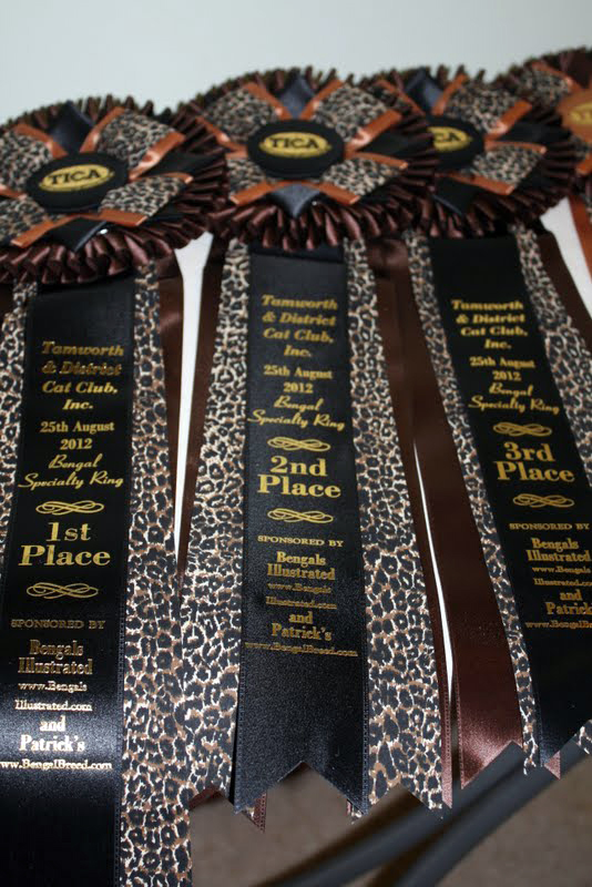 Tamworth Bengal Cat Congress Ribbons