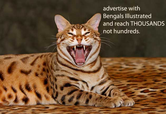 Advertising with Bengals Illustrated is one of the best marketing choices you can make!