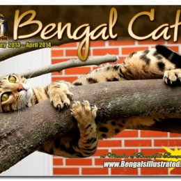 The Bengals Illustrated Bengal Cat Calendar