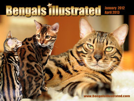 Bengals Illustrated Calendar