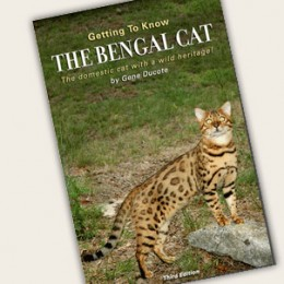 Getting To Know The Bengal Cat