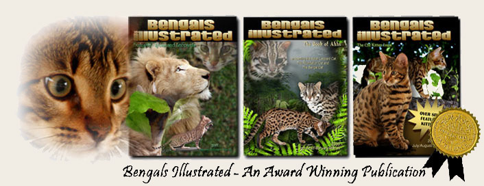 Bengal Cat Magazine