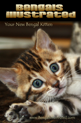 Bengal Kitten Booklet