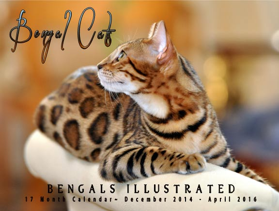 Bengals Illustrated 2015 Calendar