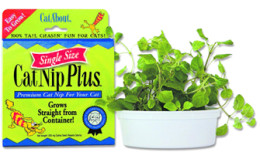Grow Your Own Cat Nip Garden