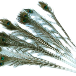 Natural Peacock Feather Cat Toy