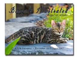 Bengals Illustrated 17 Month Calendar Dec. 2015 – April 2017