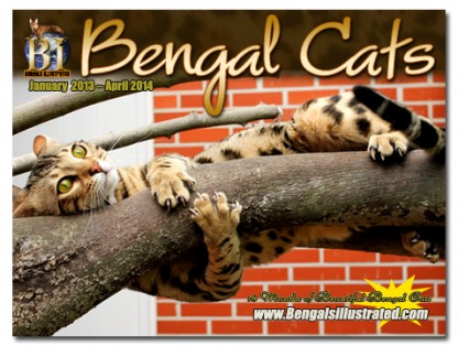 News | Bengal Cats – Bengals Illustrated