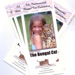 Bengal Cat Brochures