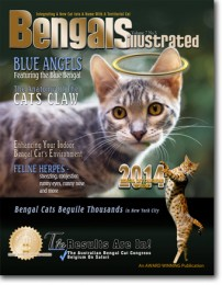 Blue Angels – The Blue Bengal Cat