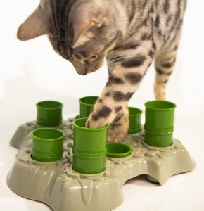 IQ feeder for cats