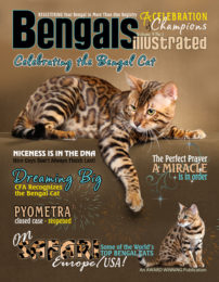 Celebrating The Bengal Cat